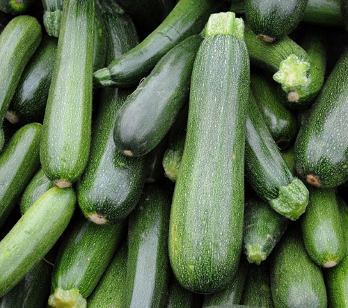 40 SEEDS Vegetable COURGETTE GREEN MACHINE High yielding